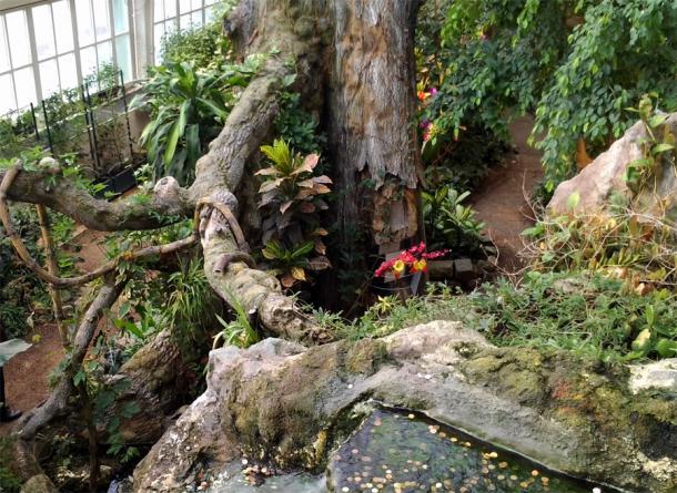 Оранжерея в доме бабочек в Вене